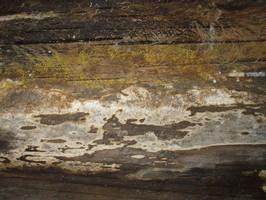 Schimmel Dachwohnung Dachraum Dach Fäulnis Schwamm Hausschwamm