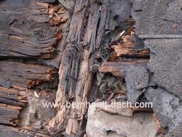 Dachschaden Dachreparatur Schimel Holz faul Frankfurt Dachdecker