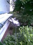 Wasserspeier Dach Rinne Frankfurt